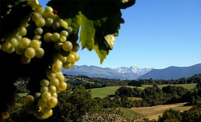 chambres_hotes_oloron_sainte_marie_domaine_pedelaborde_vin_jurancon_degustation_agret_foie_gras_vin_blanc